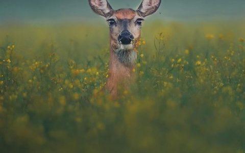 野生动物摄影大赛展下个月又要开展了,博物馆放出了几张先行图