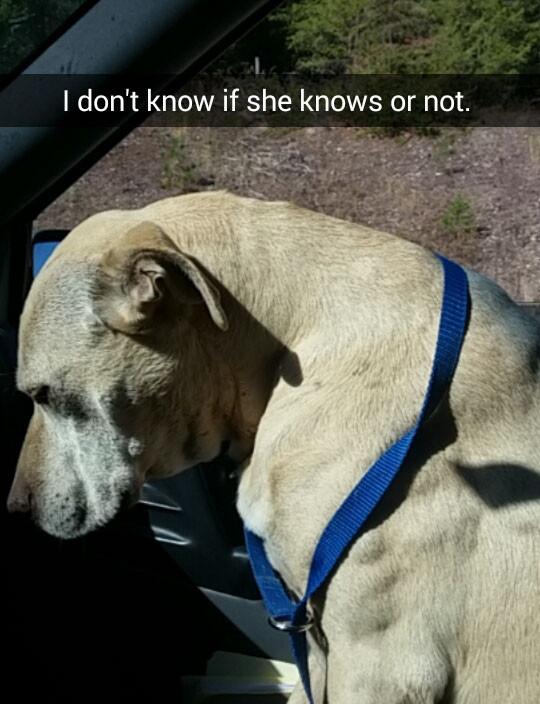 安乐死前24小时…主人陪爱犬最后一次兜风,照片心碎记录全程