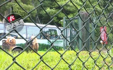 寺山修司墓附近有个犬猫墓地,看得人心都化了。