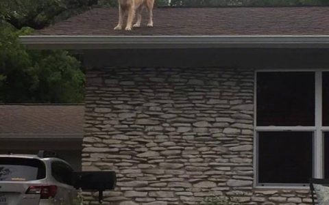 国外一网友贴的关于他家狗的告示,邻居:???